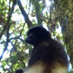 Il Madagascar, un santuario della natura