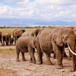 Offerte Villaggi vacanze in Kenya