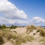 Le Dune di Tirrenia, ultimo Paradiso naturale