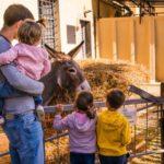 Le Masserie Didattiche del Salento: la Vacanza Ideale per ogni Famiglia