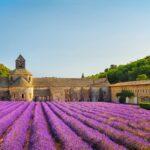 Marsiglia e la lavanda in fiore della Provenza